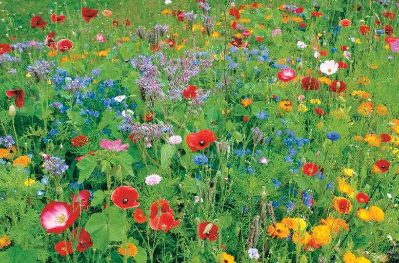 DLF Flower Mixtures - Food source & habitat for many species