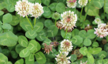DLF Grass and Clover - Sustainable farming practice